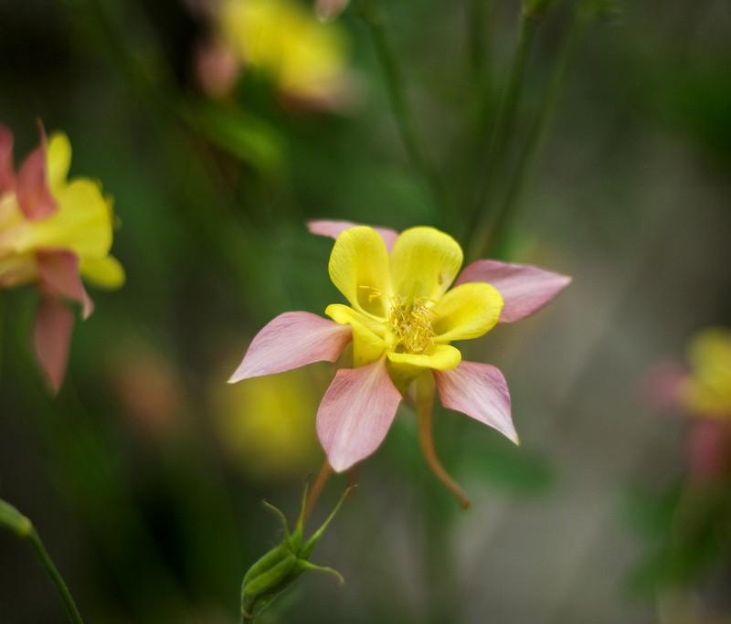 Me oul flower