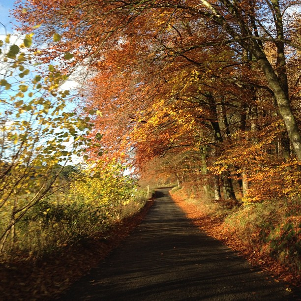 Autumn in Ravensdale