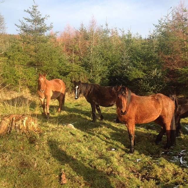 Some-friendly-strangers-blog-insta_dundalk-ravensdale