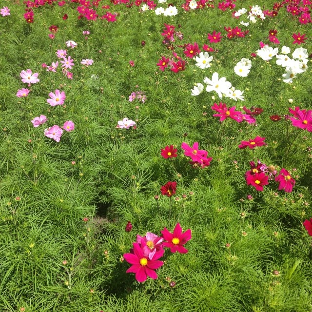 "Gorgeous ""wild"" flowers in St. Patrick's Park"