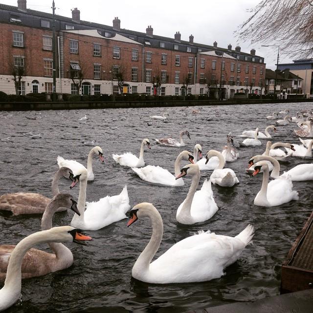 Grand Canal rowdiness #blog #dublin #igersireland