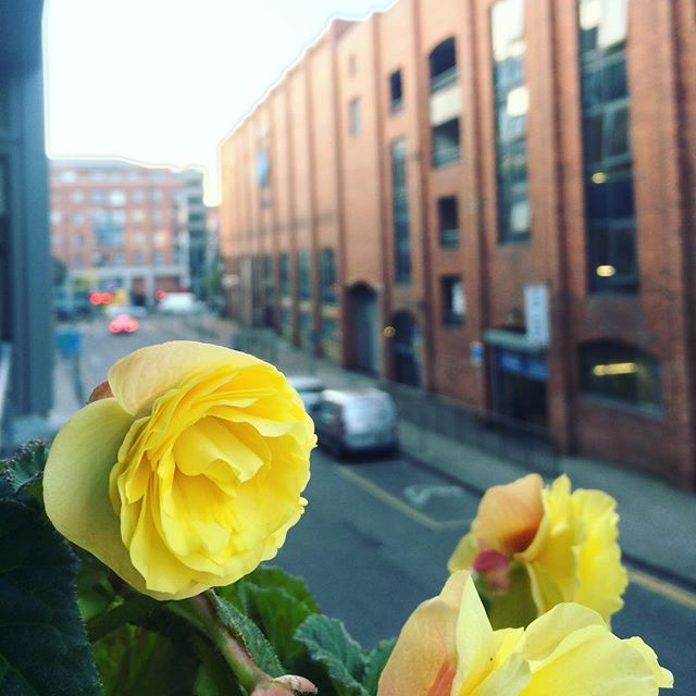 Ah, me oul begonia #blog #dublin #igersdublin #instadublin