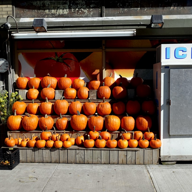 Pumpkins and Ice NYC