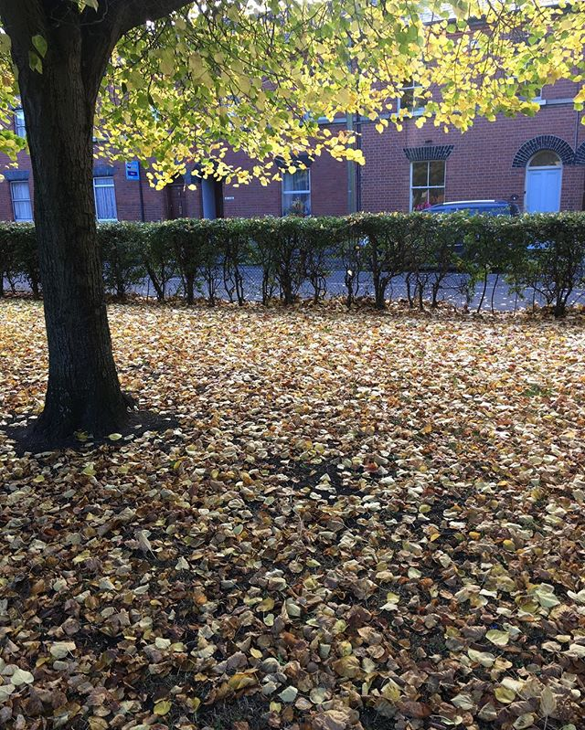 More leaves