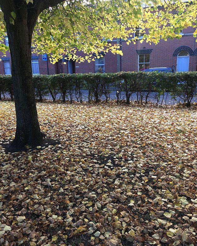 More leaves #blog #Dublin