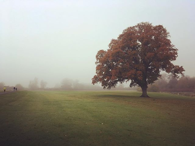 Trees are great #trees #blog