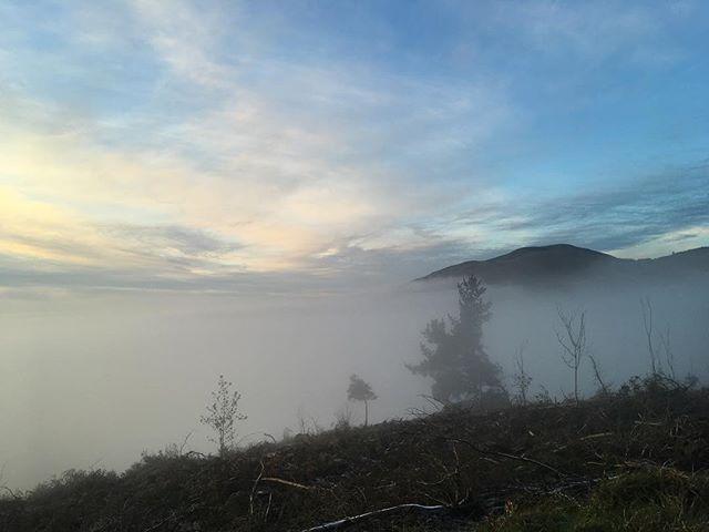 Foggy AF #blog