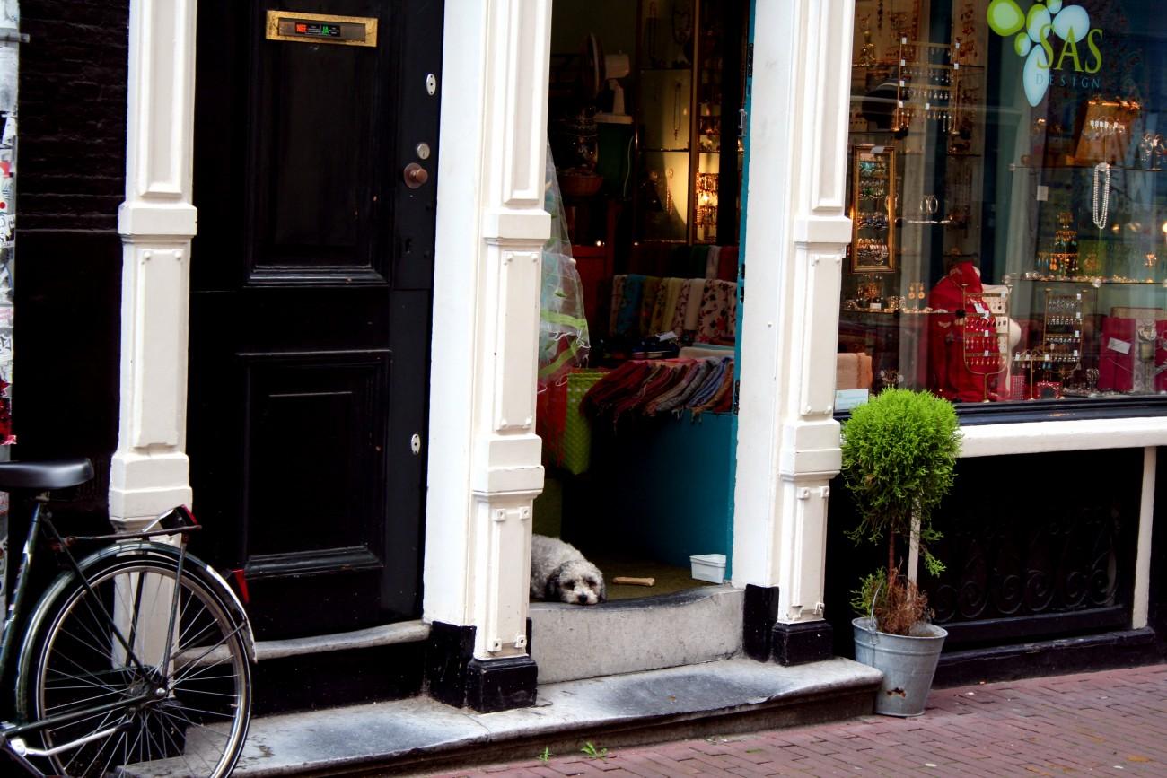 Dog shopkeeper