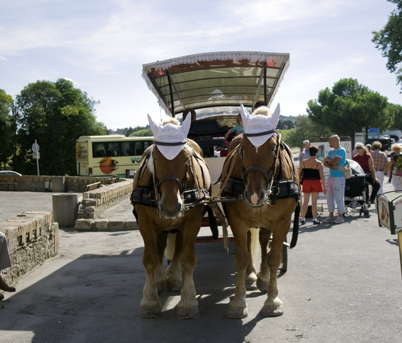 Horses with hats