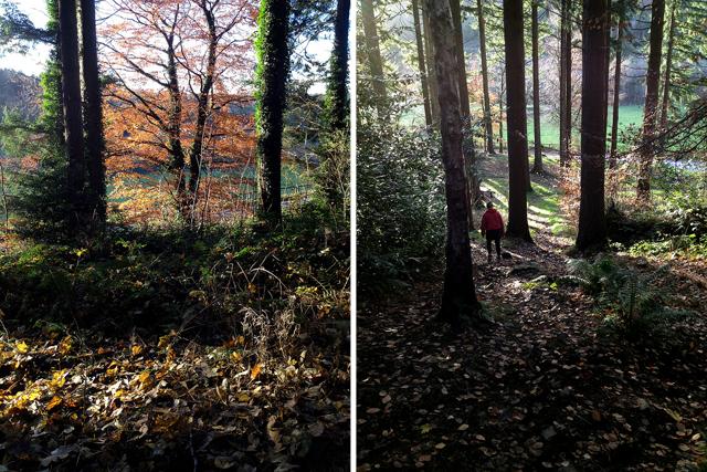 ravensdale forest